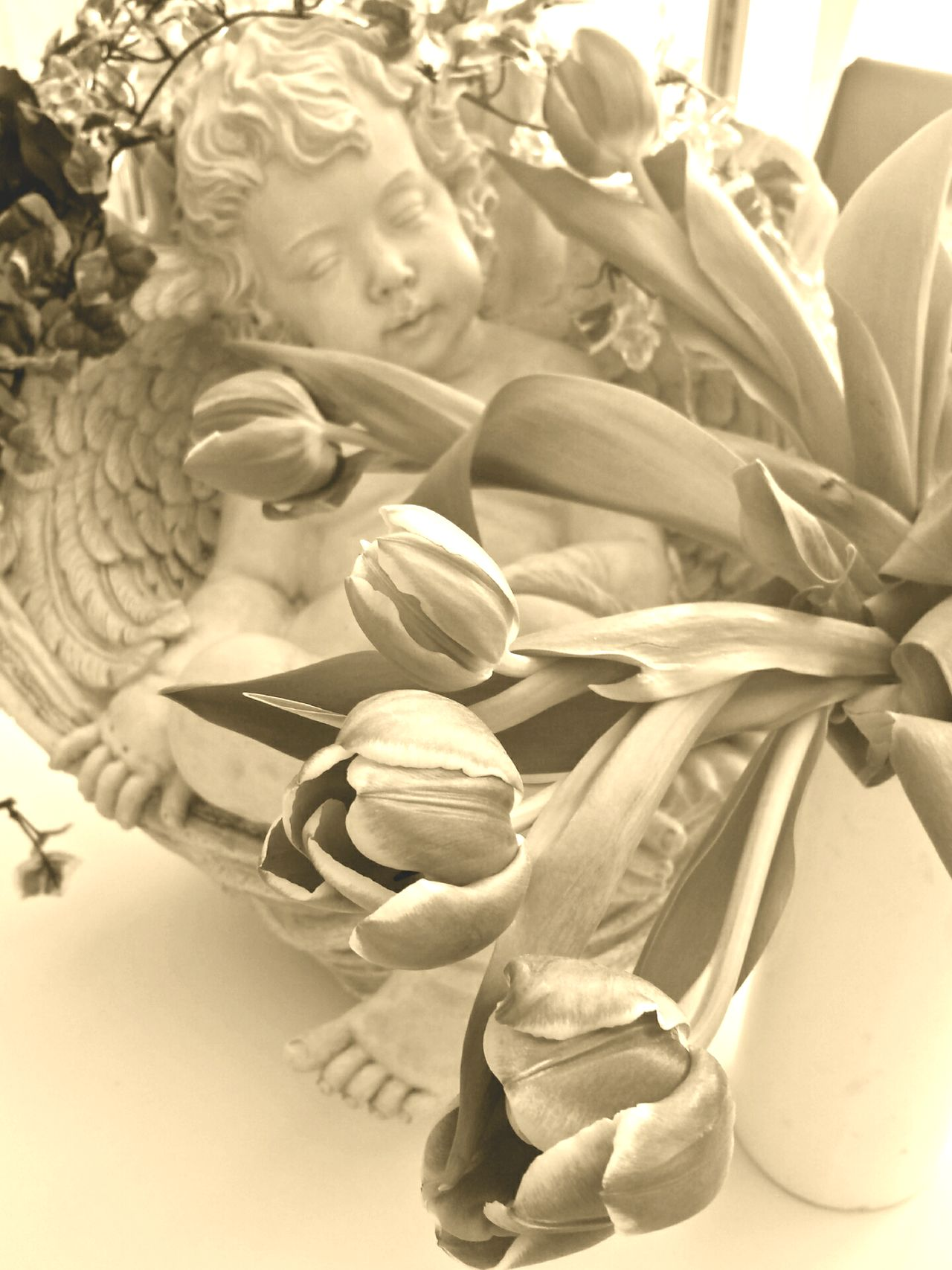 Happy Birthday Sandra! Sepia Edit Angel Angel Statue Tulips Putte Ladyphotographerofthemonth Angels Pastell