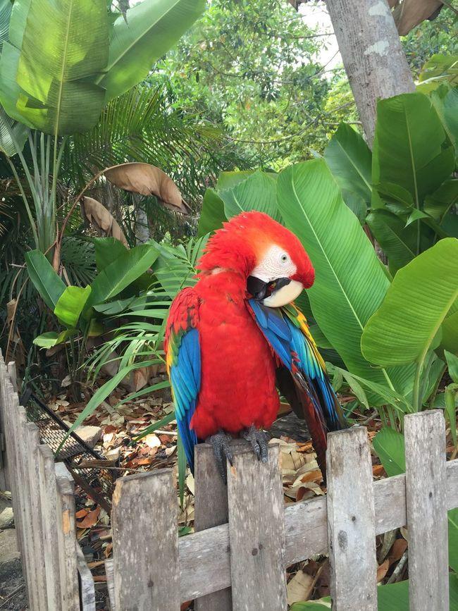 Bird First Eyeem Photo