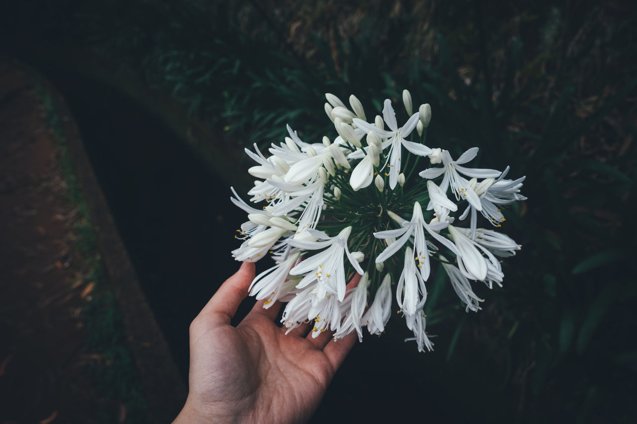 Female hand touching white Agapanthus flower. Agapanthus Beauty In Nature Close-up Day Flower Flower Head Fragility Freshness Holding Human Hand Nature One Person Outdoors People Touching White