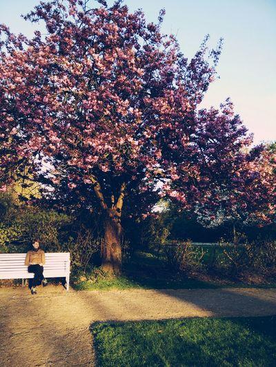 Park Public Park Bench Spring Springtime Blossoms