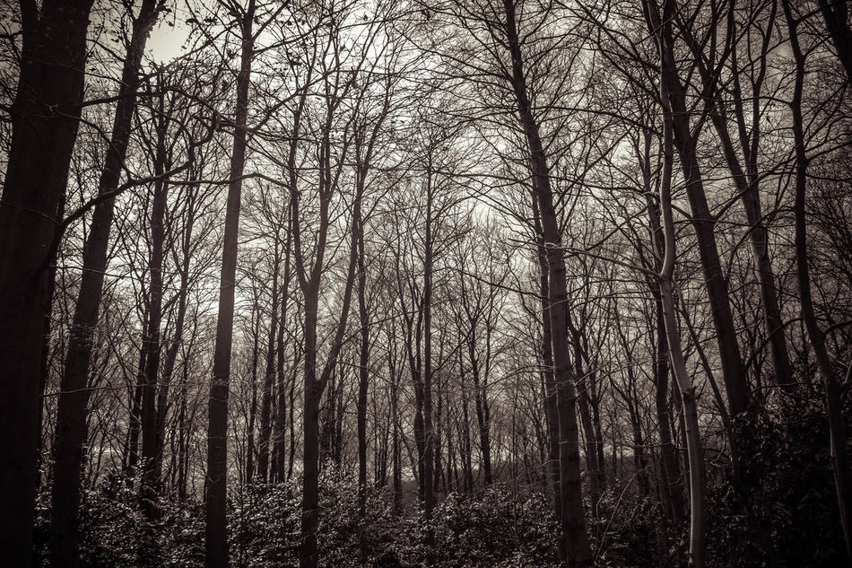 Bare Tree Beauty In Nature Black & White Black And White Branch Day Environment Forest Growth Landscape Lots Of Leaves Monochrome Nature No People Outdoors Scenics Sky Tranquility Tree Trees WoodLand