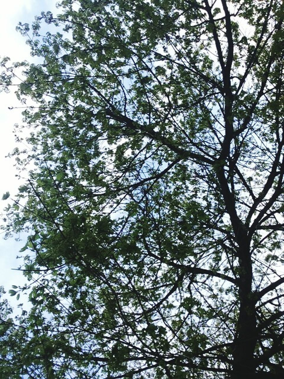 tree, low angle view, nature, growth, branch, forest, beauty in nature, day, no people, outdoors, sky
