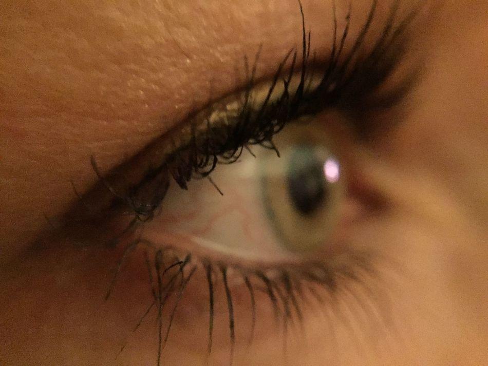 Eye Macro Green Grey Eyes Eye Lashes PUPILS Iris The OO Mission