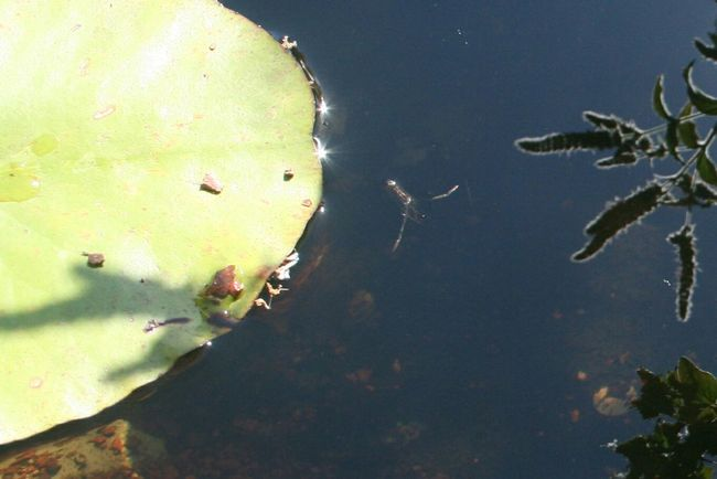 Flowers,Plants & Garden Flowers Nature Pond Water Lily Pond Life Water Boatman