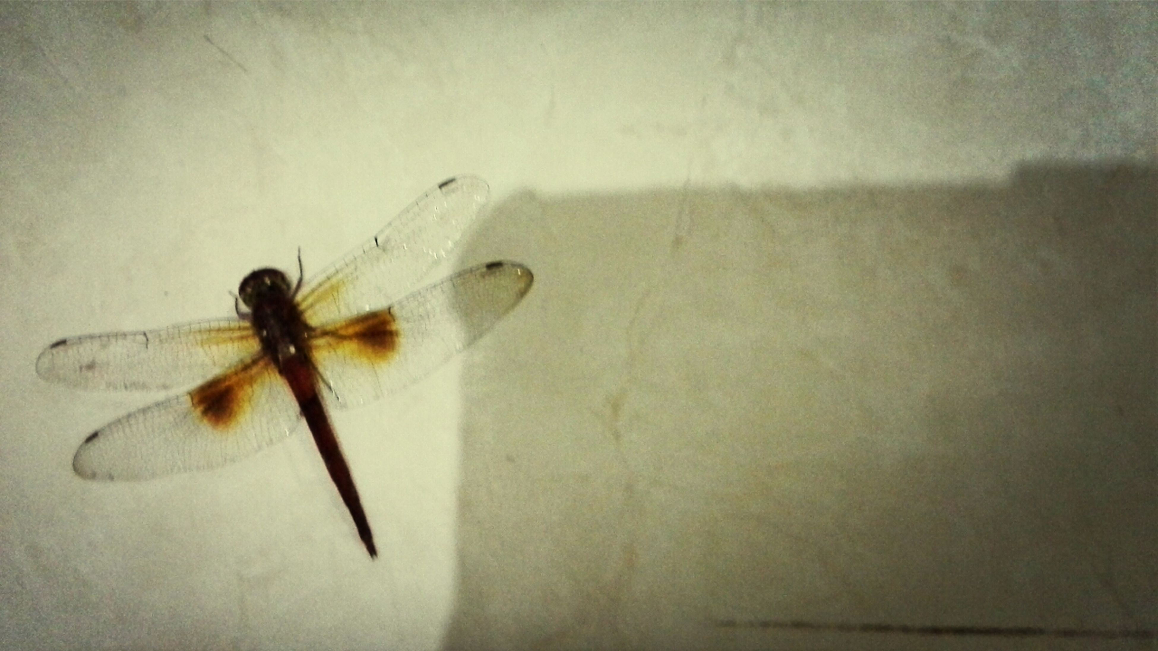 Dragonfly Facing The Death Alone