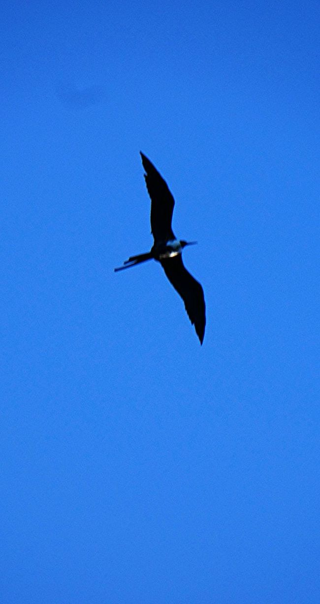 they are free .and the feel light and happy to be where they belong to ... Birds Flying Nature Taking Picteure