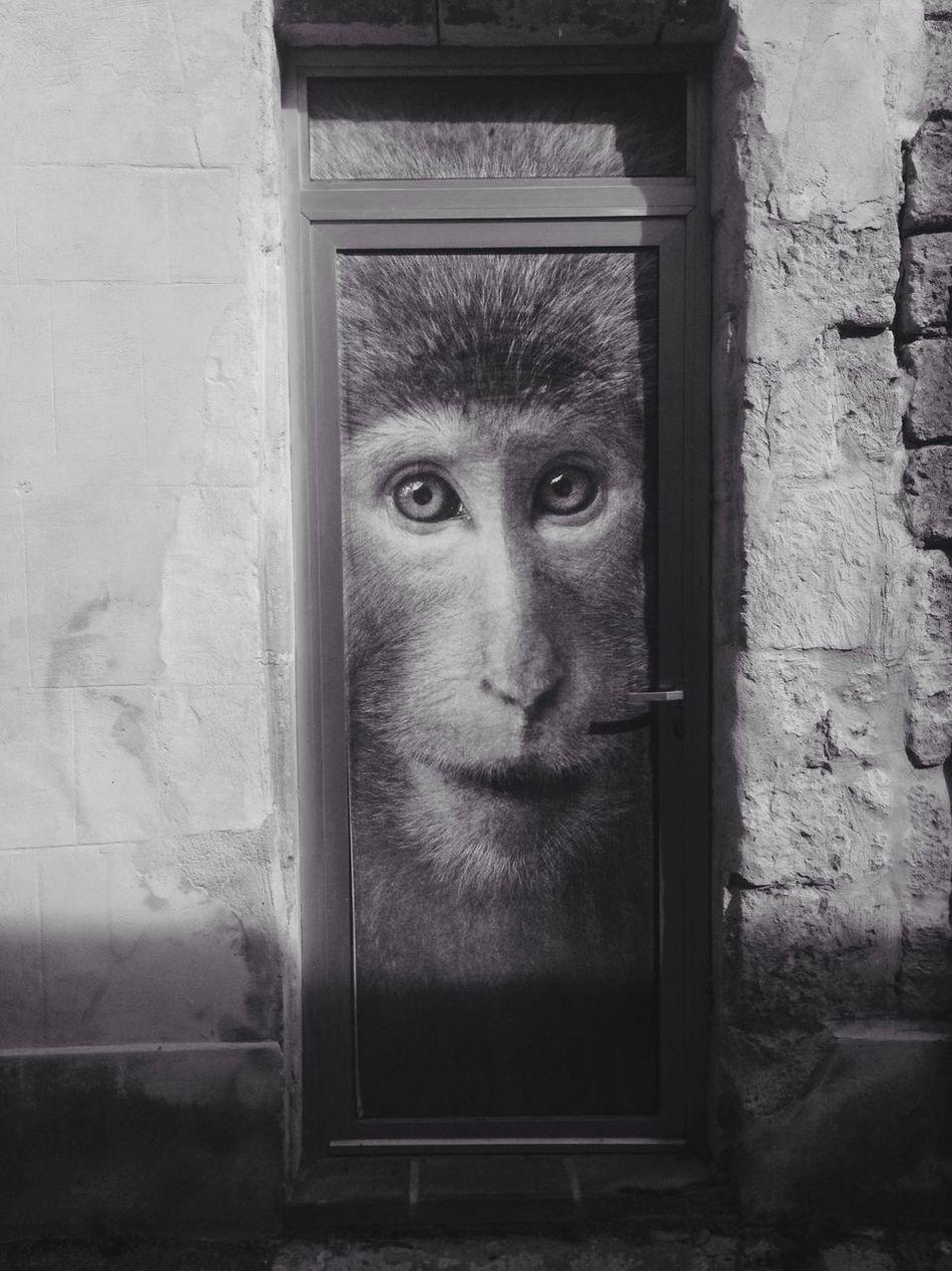 Built Structure Animal Themes France 🇫🇷 IPhone Photography Monkeys Arles Provencealpescôtedazur Door Streetphotography Architecture EyeEmNewHere