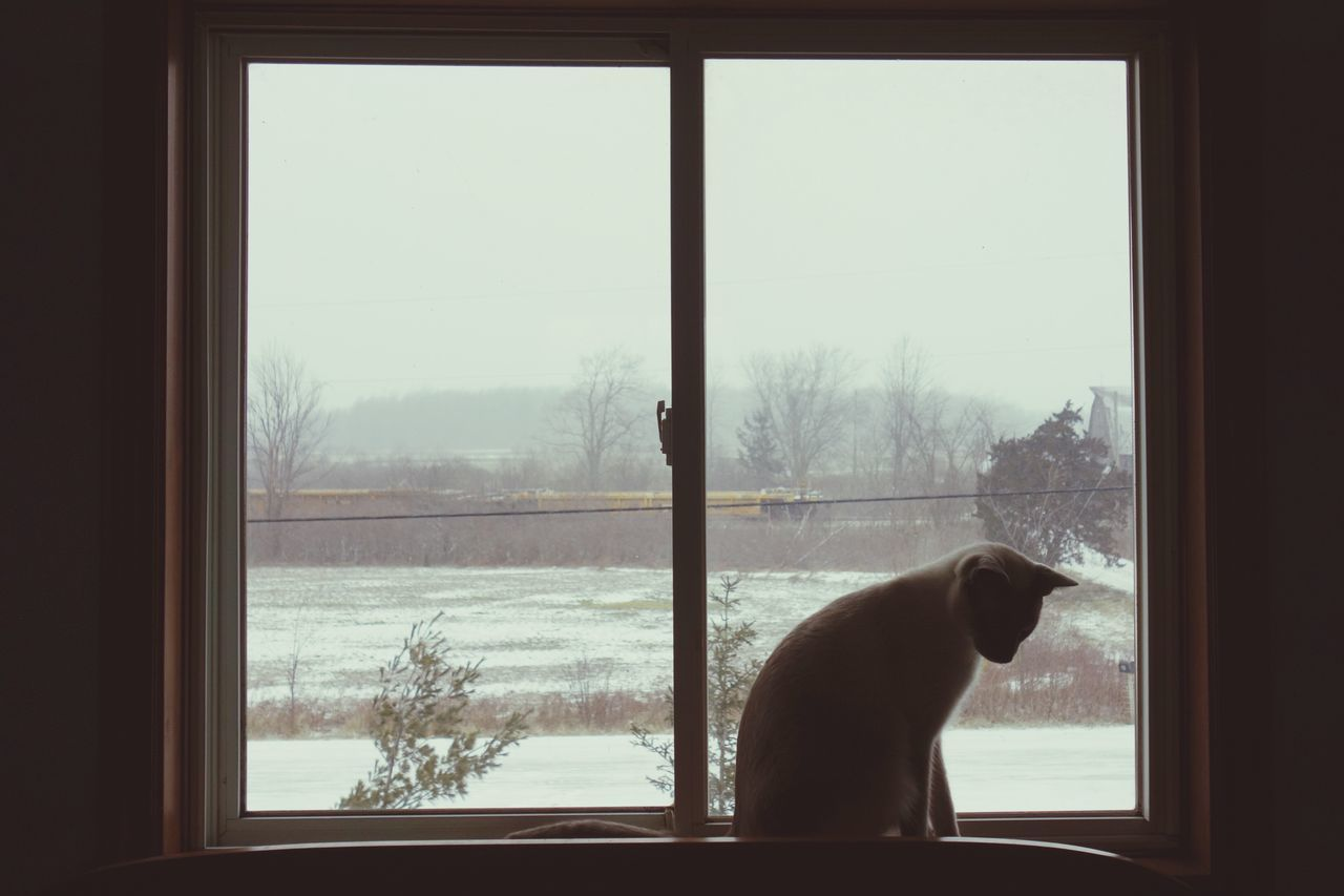 Window Transparent Tree Looking Through Window Winter Bare Tree One Animal Weather Animal Themes Cold Temperature Snow Indoors  Clear Sky Window Sill Day Domestic Animals Nature Pets Sky Siamese Beauty In Nature EyeEmNewHere Rx100 Canada
