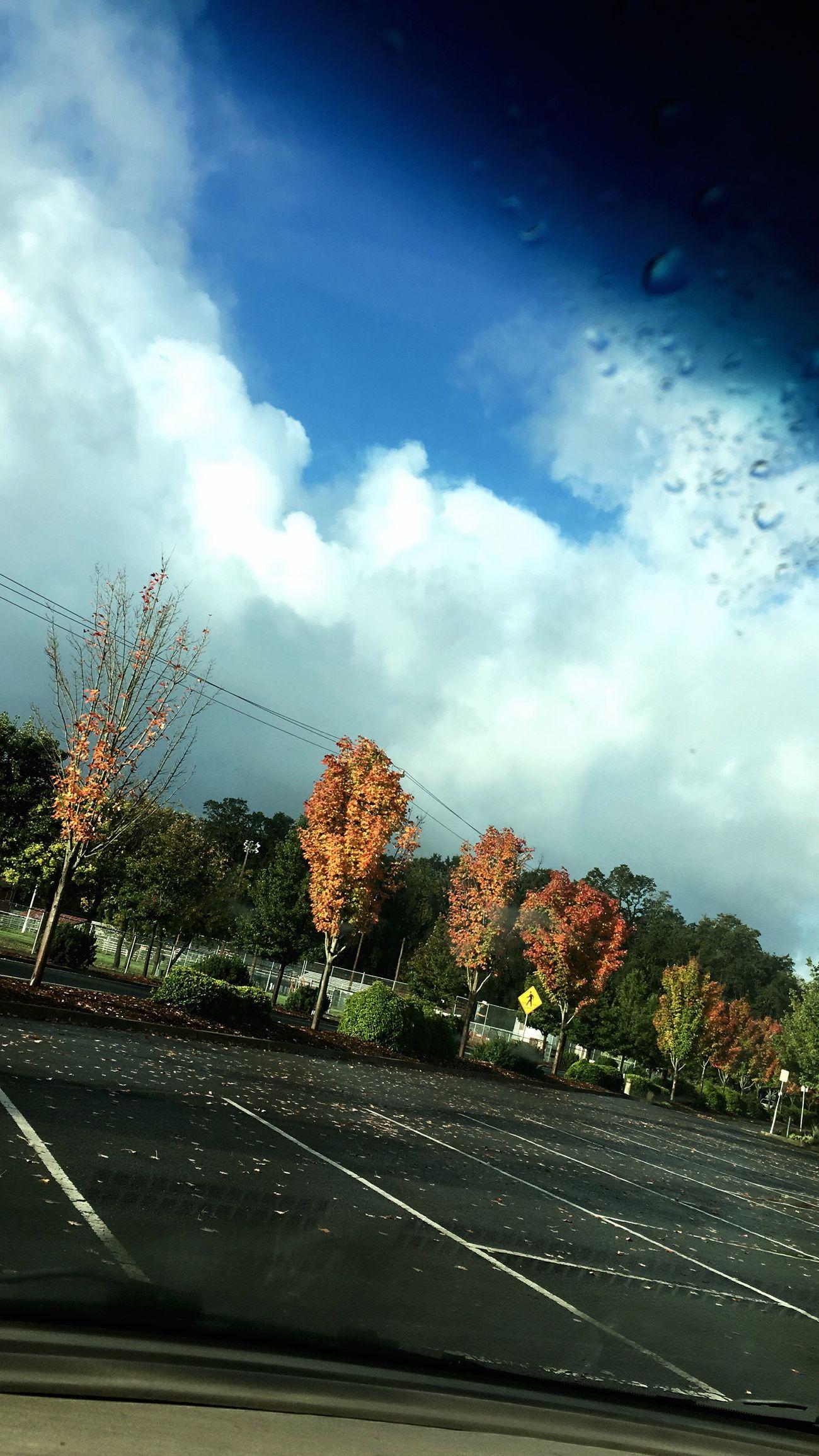 Cloudy Sky Rain Trees Leafes First Eyeem Photo