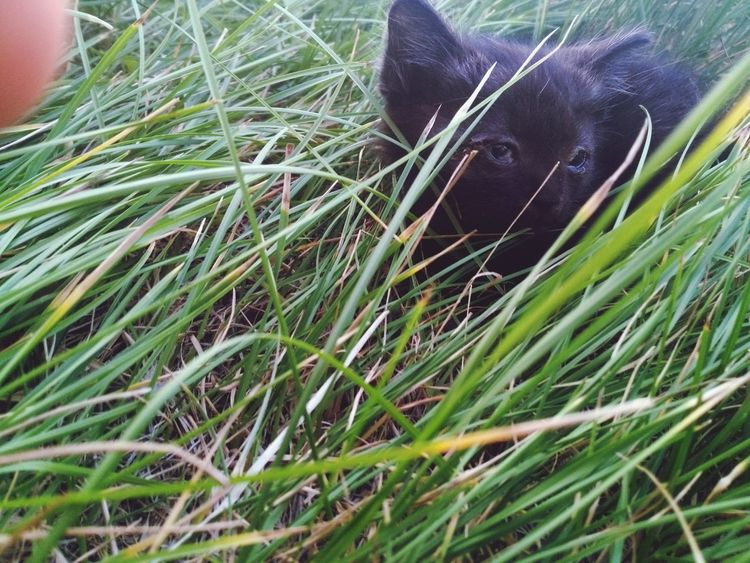 Grass One Animal Mammal Nature Animal Themes Domestic Animals No People Animals In The Wild Outdoors Day Close-up Green Cat Cats Of EyeEm EyeEmNewHere