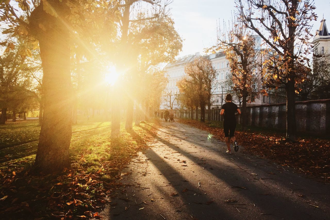 Autumn Fall Autumn Colors Fall Beauty Runner Sport Jogging Sun Evening Sun Park Urban Escape 43 Golden Moments