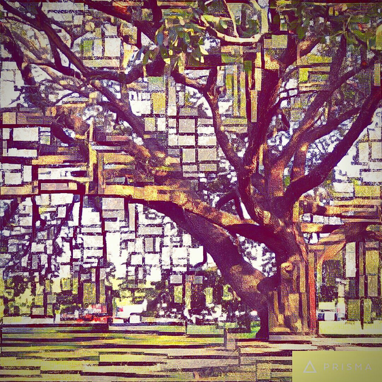 Tree Land Vehicle Transportation Branch Tree Trunk South Carolina From My Point Of View Fine Art Photography Abstract Prisma App Growth Day Outdoors Large Treelined Growing No People