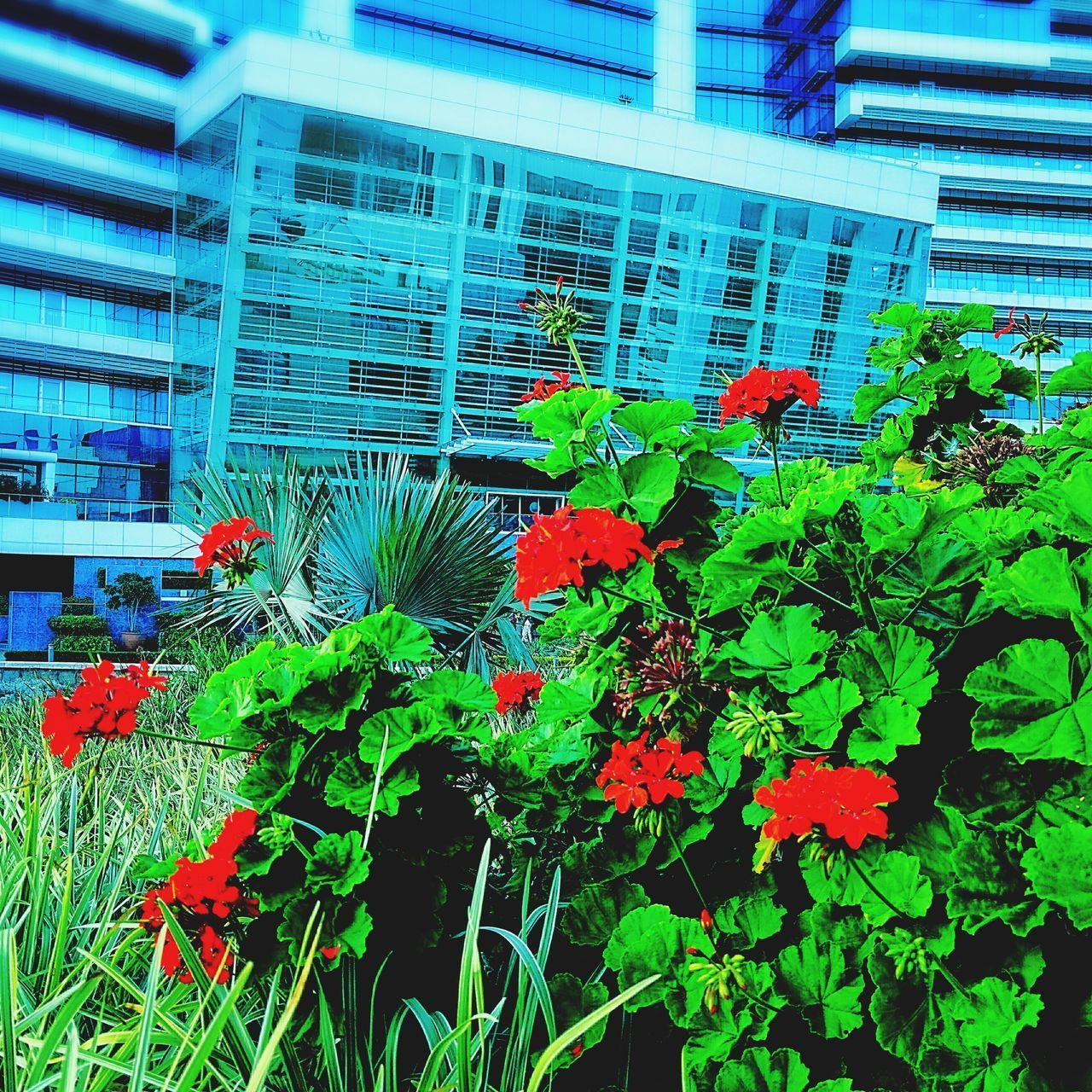 Outdoors Garden Flowers Beauty In Nature Garden Art Flower Nature Flower Head Office Garden Office View SEZ Hcl Garden Decor Garden Photography View From Below Nature Close-up Plant Freshness Hclcampus