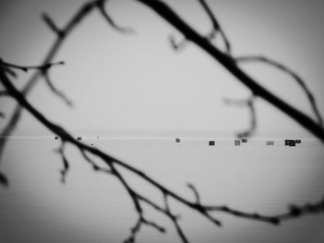 Bare Tree Ice Fishing Lake Nipissing Northern Ontario Outdoors Simplicity Winter