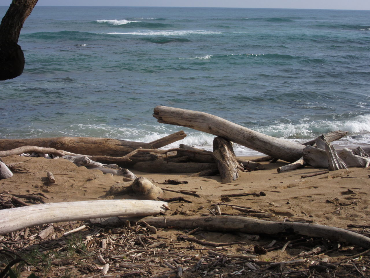 Water Sea Nature Kauai Hawaii Outdoors Sand Driftwood