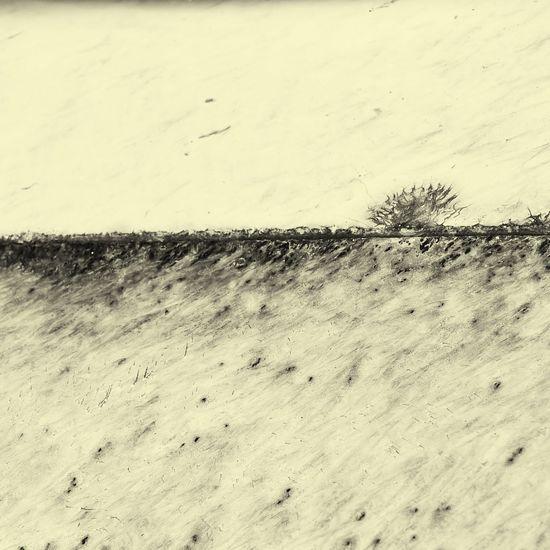 a dreary landscape Wintry Haunting  White Landscape Paint EyeEm OpenEdit Monochrome Leica D-lux Typ109