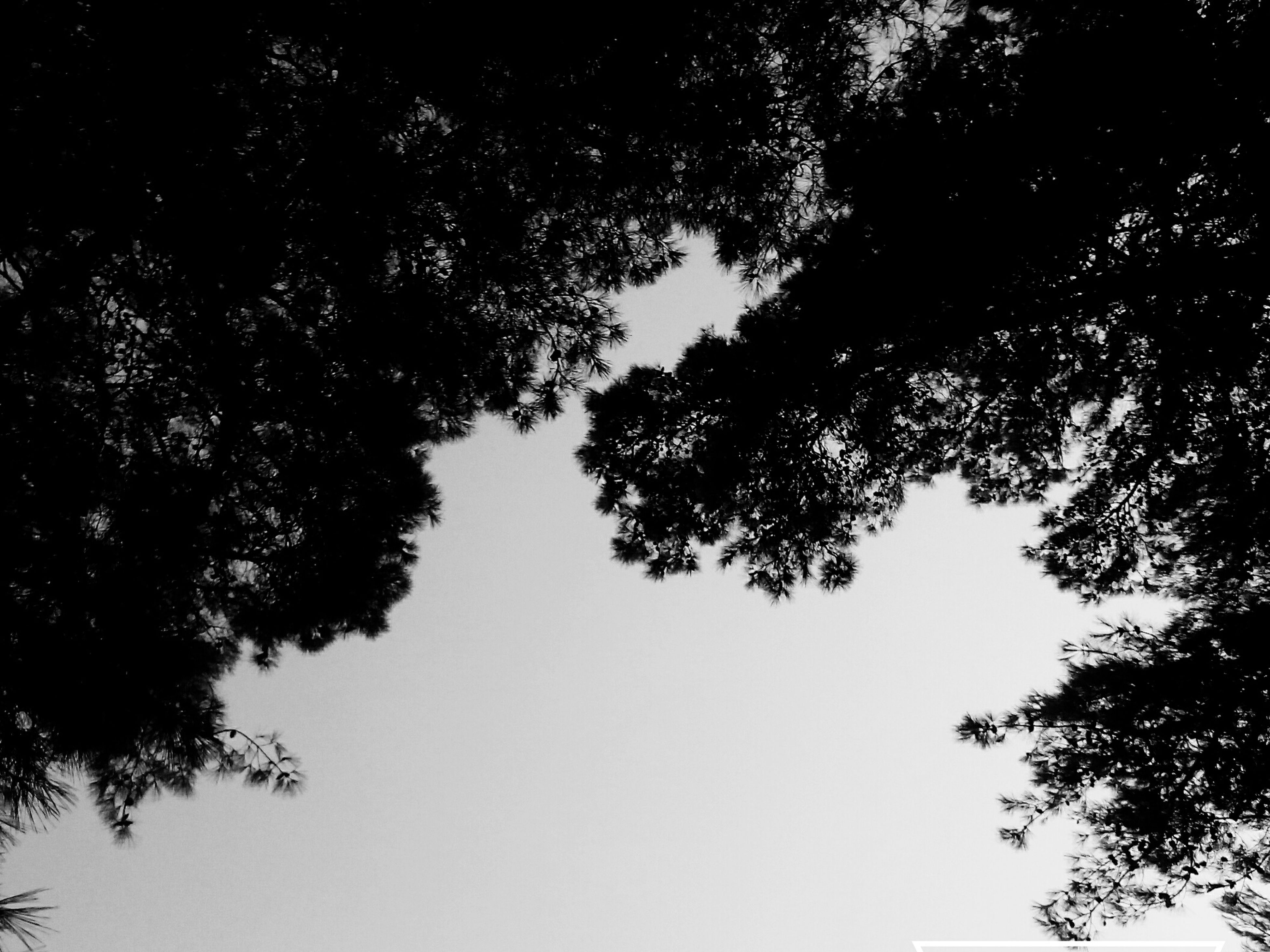 tree, low angle view, branch, growth, silhouette, clear sky, tranquility, nature, directly below, scenics, beauty in nature, tranquil scene, day, sky, outdoors, blue, outline, no people, tree canopy, green color, high section, treetop