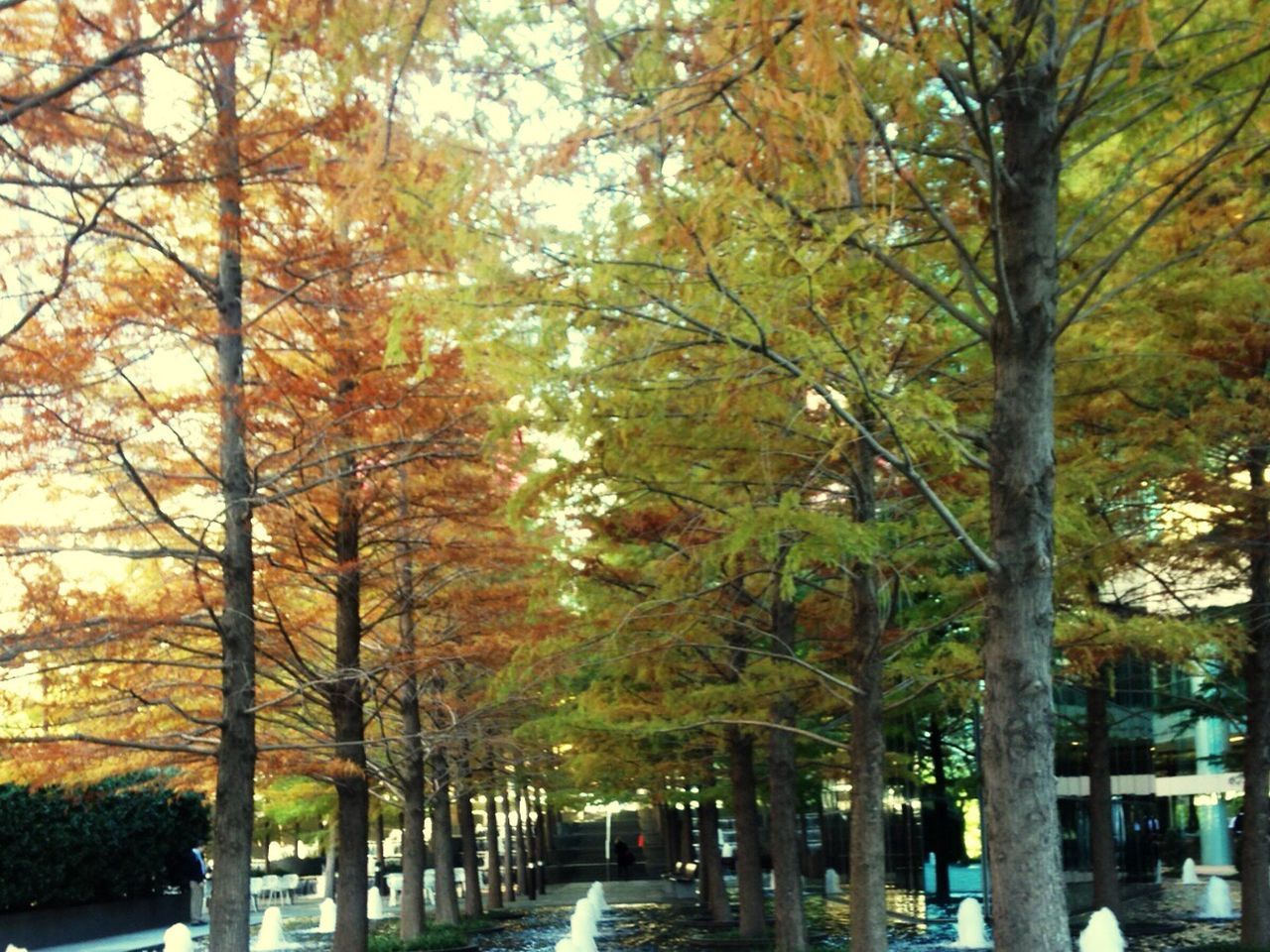 autumn, tree, nature, change, branch, beauty in nature, outdoors, no people, day
