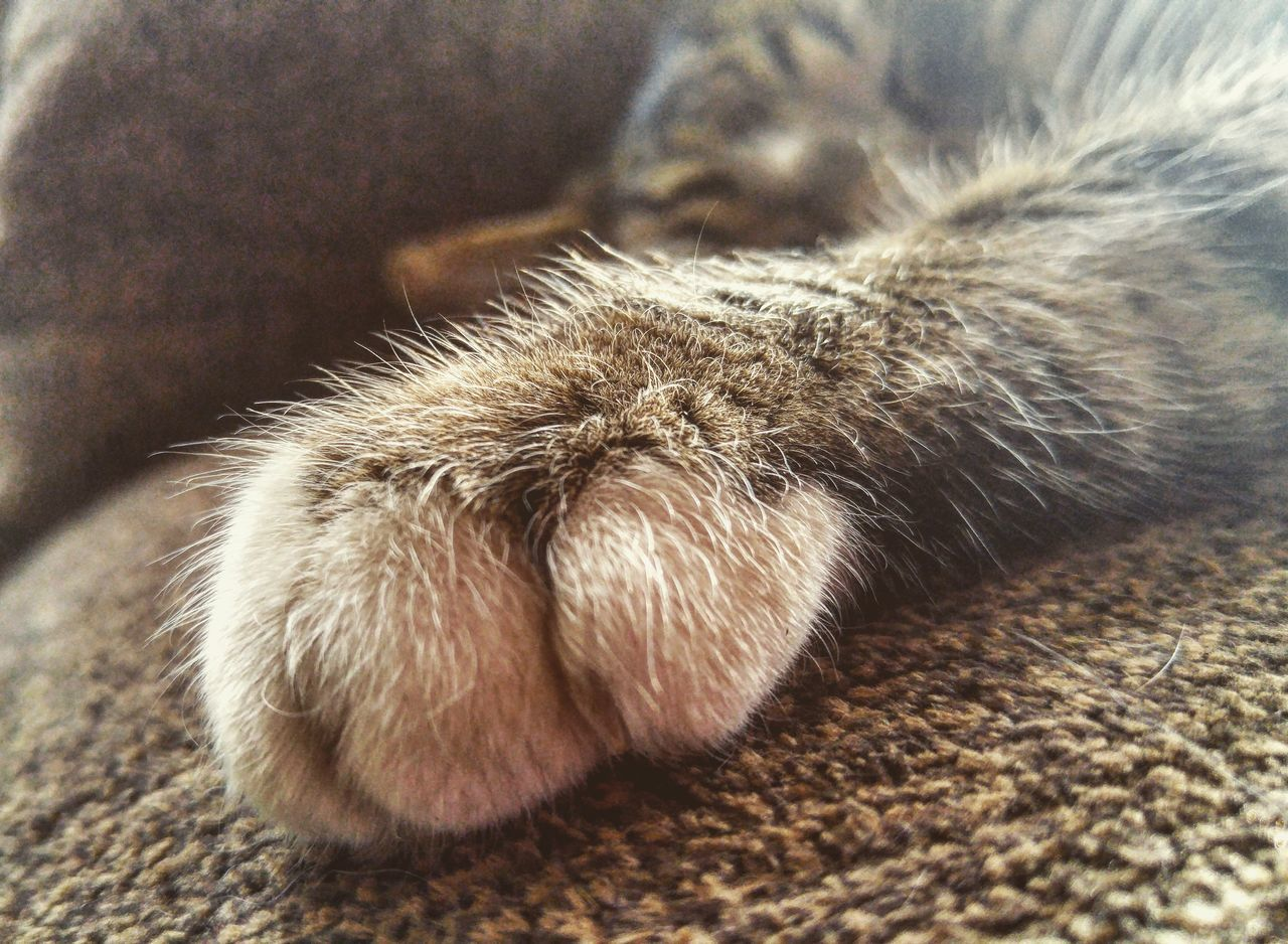 Animal Themes One Animal No People Close-up Mammal Domestic Animals Pets Indoors  Day Animal Leg Paw Kitty Cat Kitty Cat Cats Of EyeEm Cats Feline Furry Fur Furry Friends Stray Cat Animal