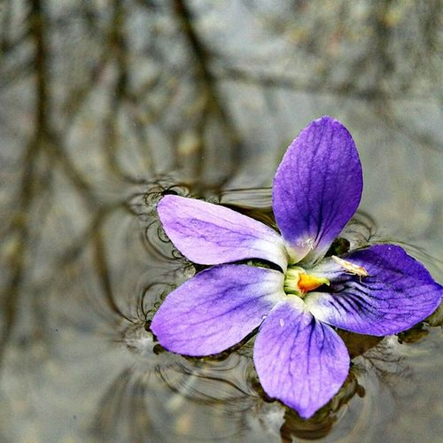 Photo_by_vs Beautiful VSCO Cool Instagram_photo Spring Time Flower Like Violet