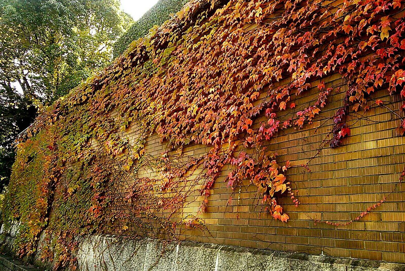 Fall Autumn Autumn Leaves