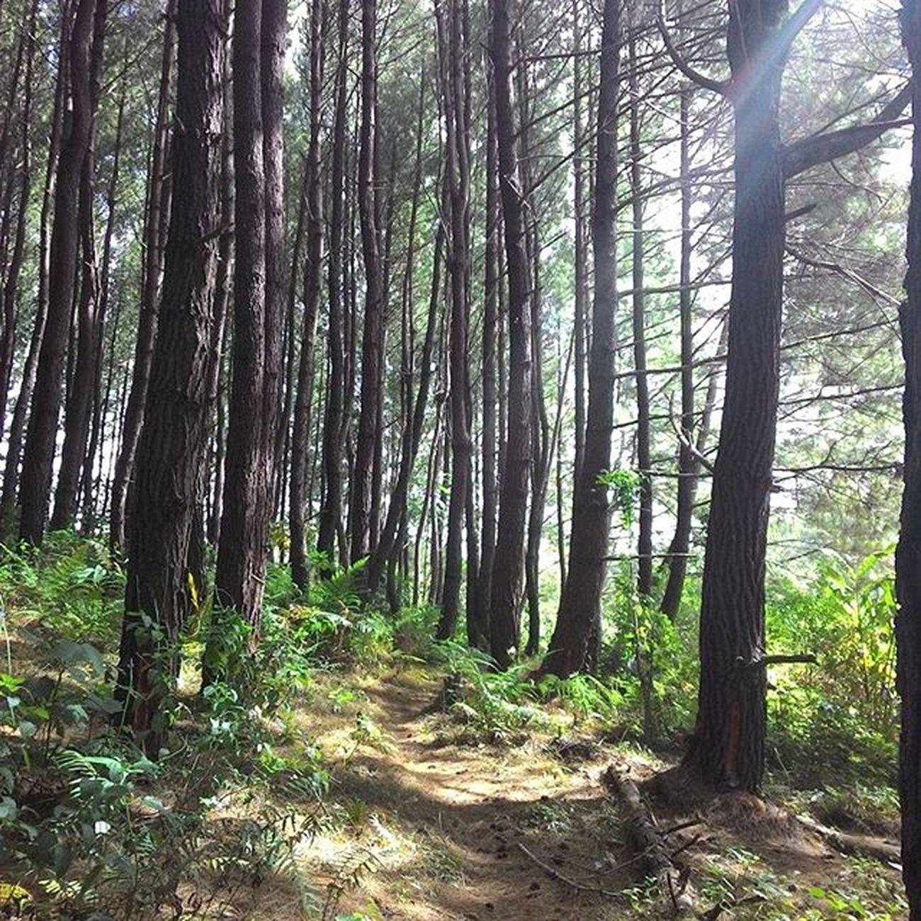 Upload bersama -------------------------------------------- Keluarlah dari rumahmu... diluar sana sangatlah berbeda dengan apa yang engkau pikirkan..... -------------------------------------------- Loc : Hutan Pinus,Desa Salodik,Kecamatan Luwuk -------------------------------------------- @instanusantara Instanusantara Inub9719 InstanusantaraPalu Palunagaya