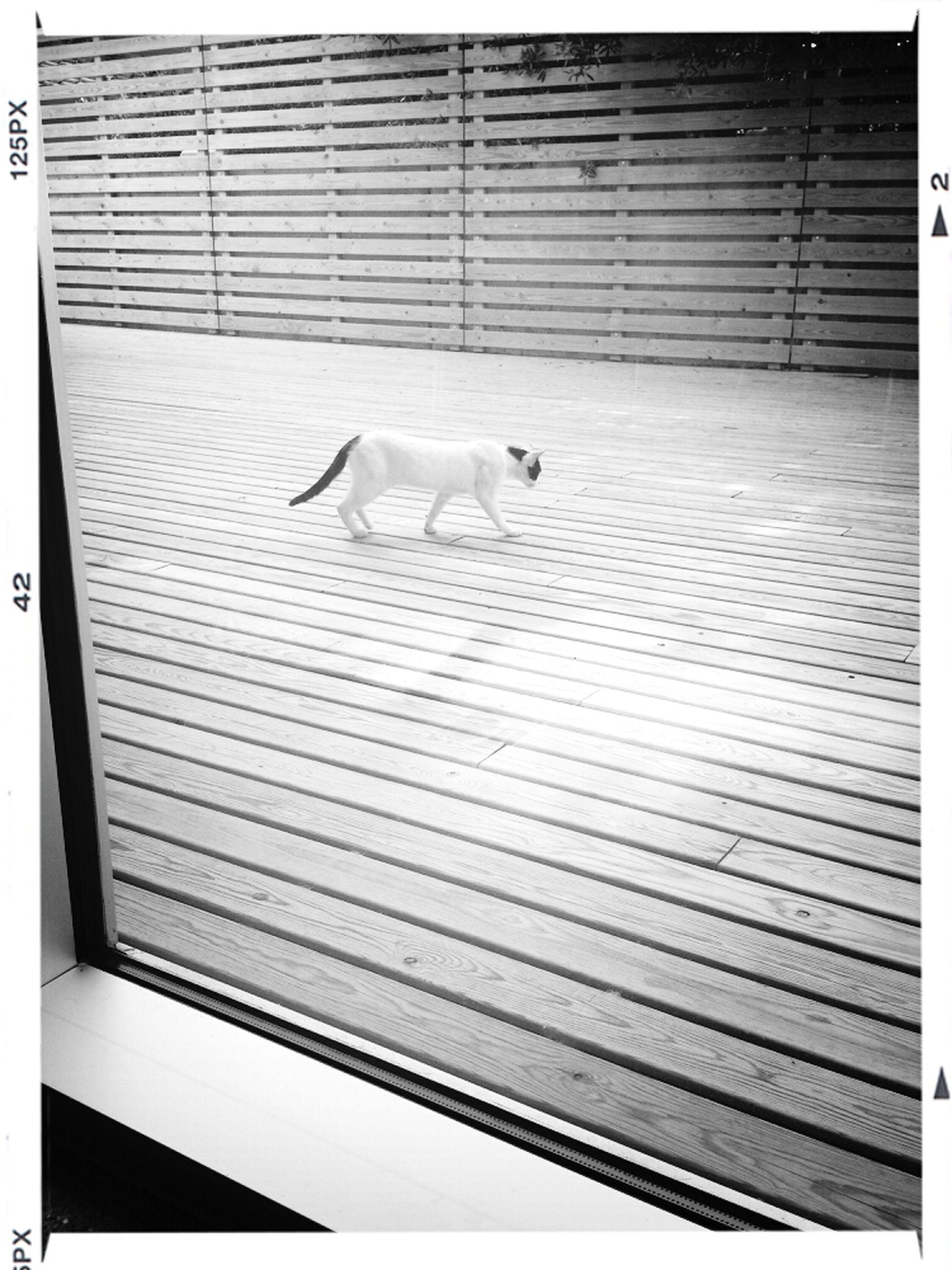 Hay quién sí aprovecha todo el espacio de la biblioteca Cat Gato Hide And Seek Urban Geometry