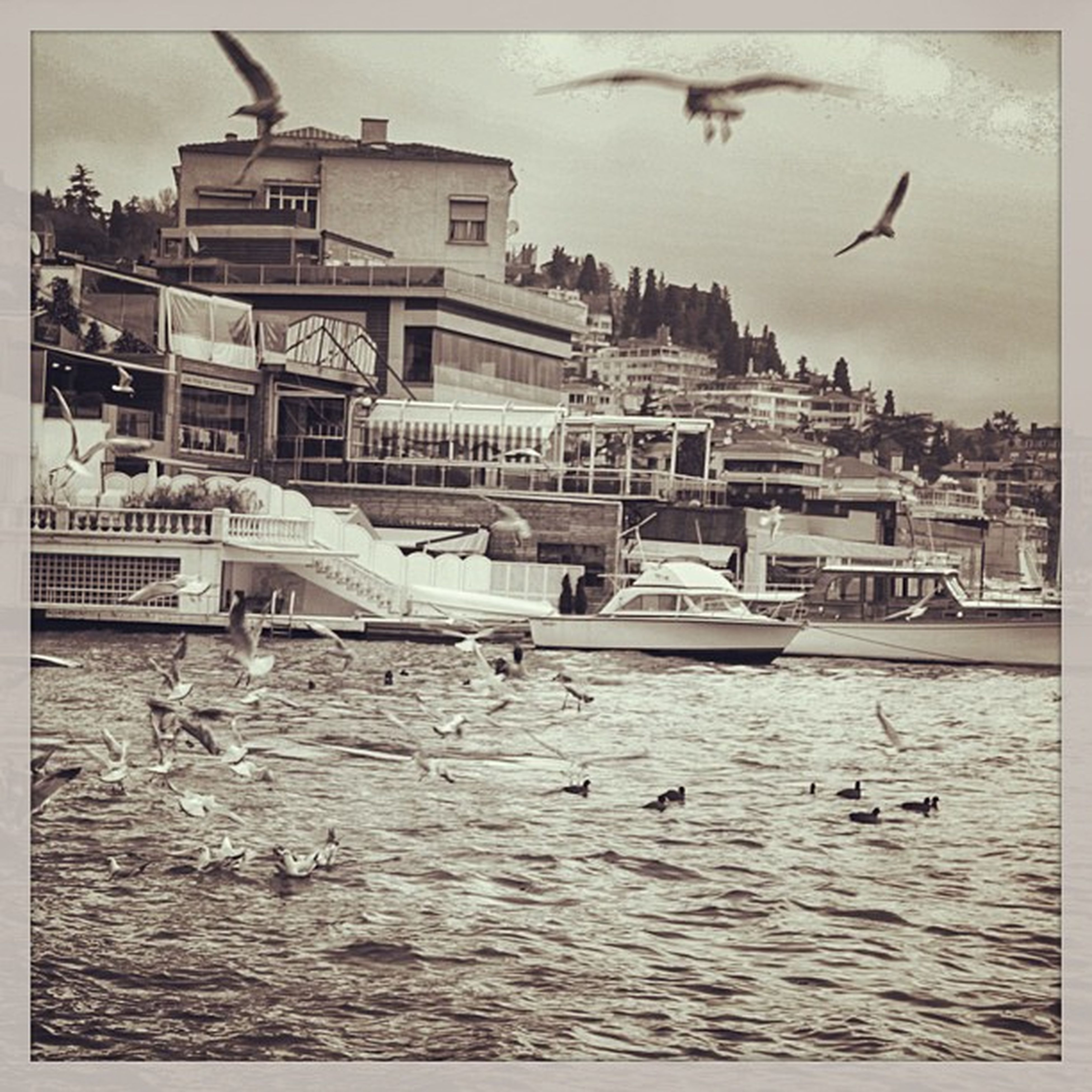 bird, animal themes, flying, animals in the wild, wildlife, architecture, built structure, water, building exterior, seagull, transfer print, spread wings, flock of birds, waterfront, auto post production filter, sea, sky, river, medium group of animals
