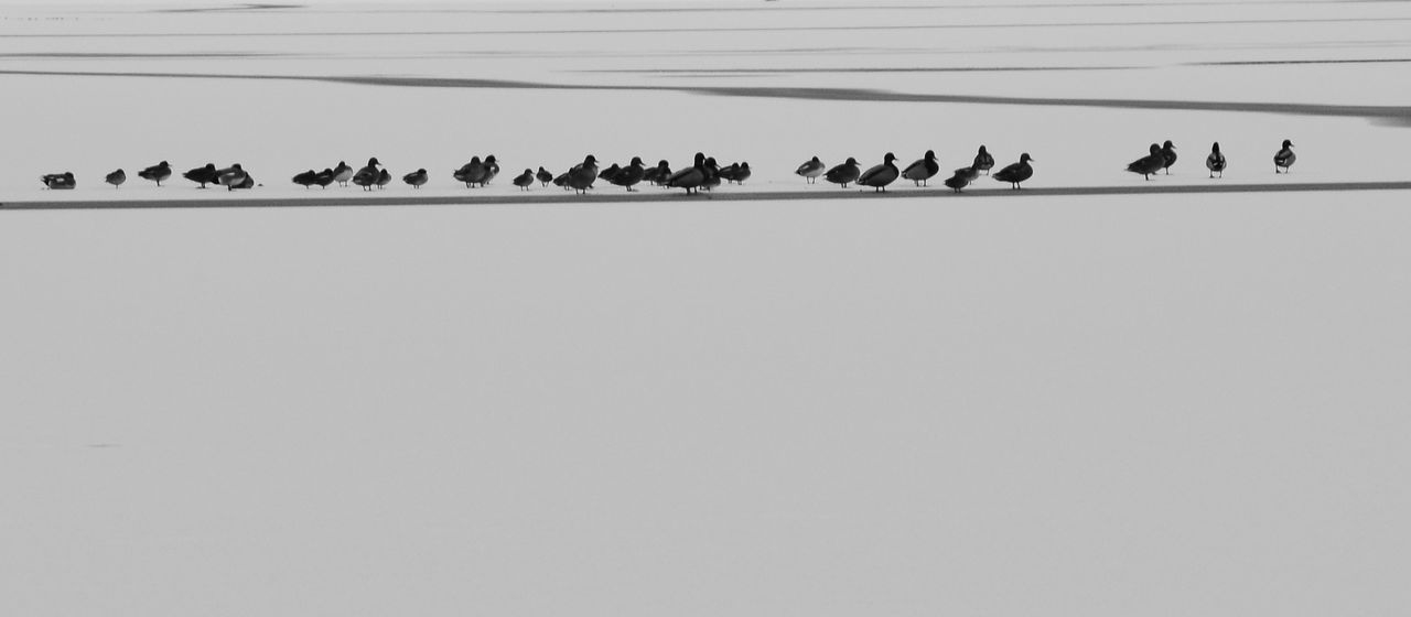 All Lined Up In A Row Ducks Frozen Frozen Lake LINE Nature Queue Reservoir Winter Ice Winterscapes Winterscape Winterscene Alllinedup Birds Bird Photography Birds Of EyeEm