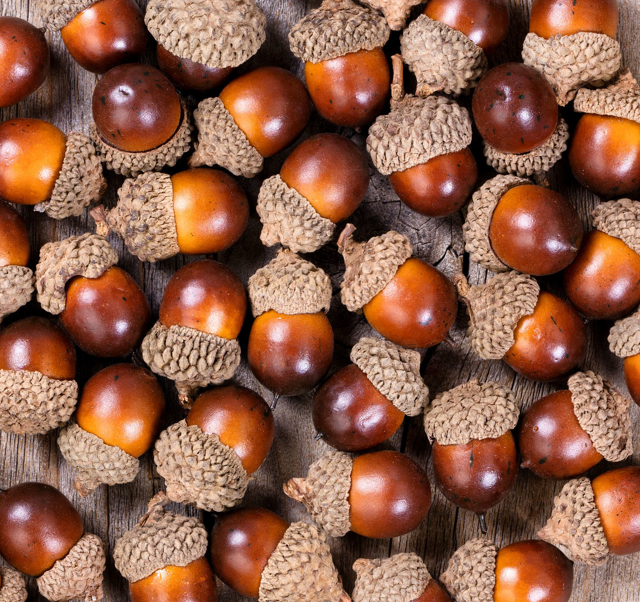 Filled frame of acorns Acorn Backgrounds Close-up Day Food Food And Drink Freshness Full Frame Healthy Eating Indoors  Large Group Of Objects No People Nut Ready-to-eat Seed