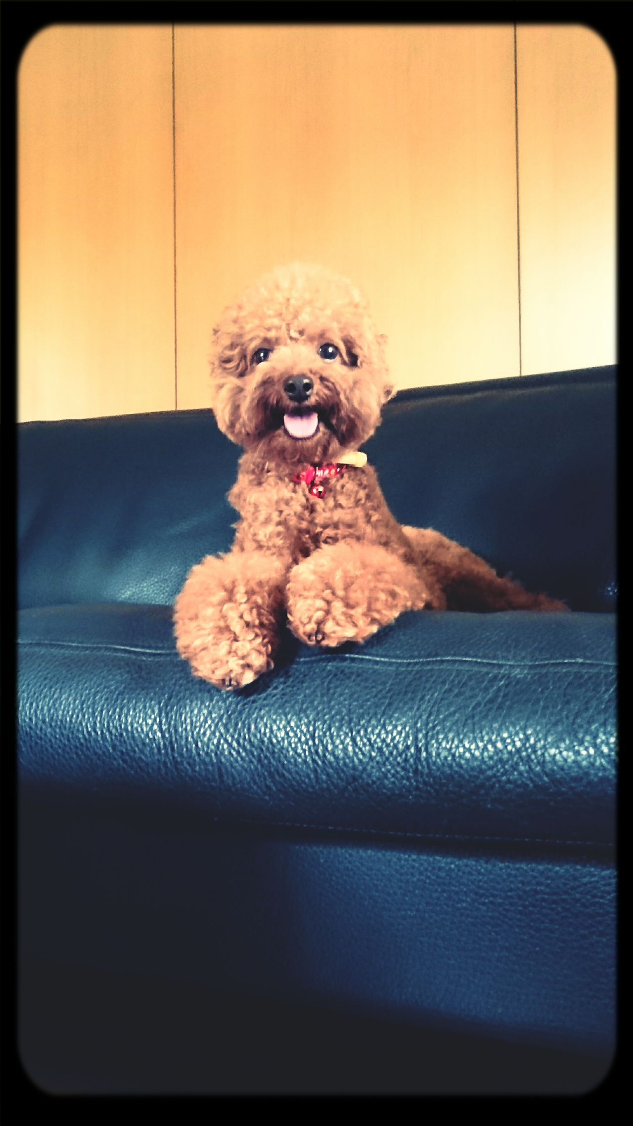 "My Cute ""Mou Chiu"" ? Cute Dog  Doglovers Dogoftheday Happydog"