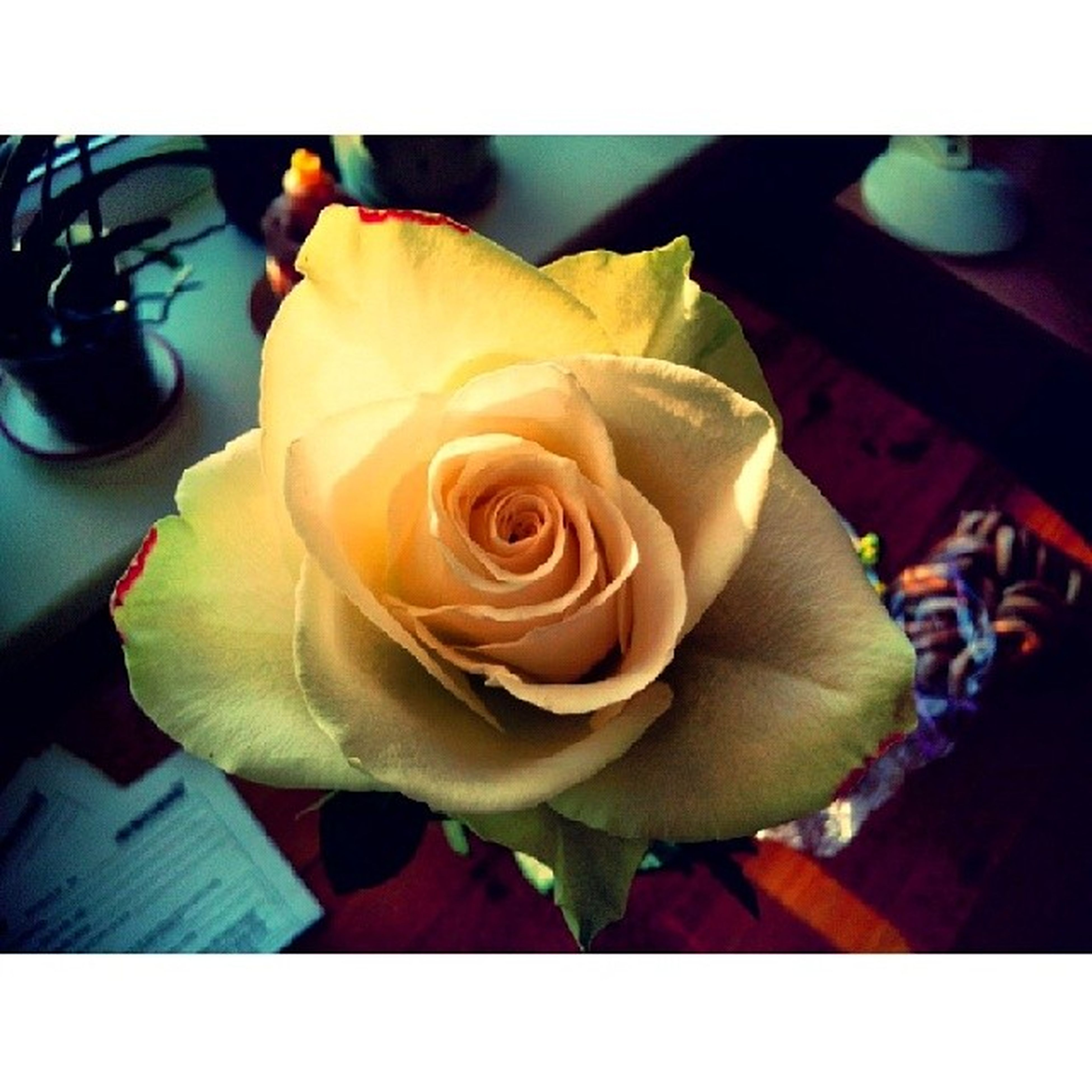 transfer print, flower, petal, flower head, auto post production filter, freshness, rose - flower, fragility, close-up, beauty in nature, rose, growth, nature, indoors, high angle view, focus on foreground, blooming, single flower, plant, leaf