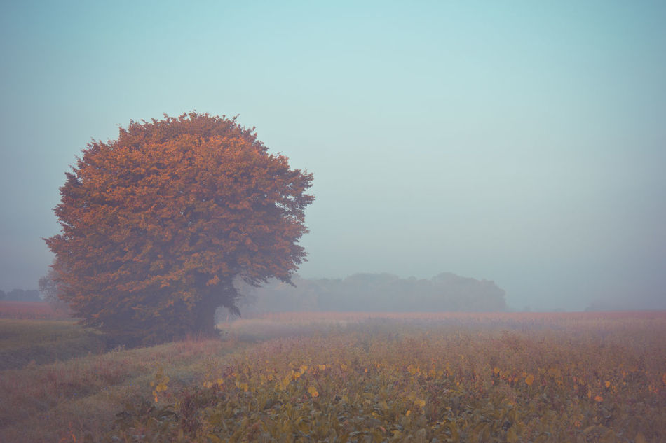 Agriculture Autumn Autumn Colors Beauty In Nature Clear Sky Day Field Fog Foggy Foggy Morning Grass Growth Landscape Nature Nature Nature Photography Nature_collection Nature_perfection No People Outdoors Rural Scene Scenics Tranquil Scene Tranquility Tree Art Is Everywhere