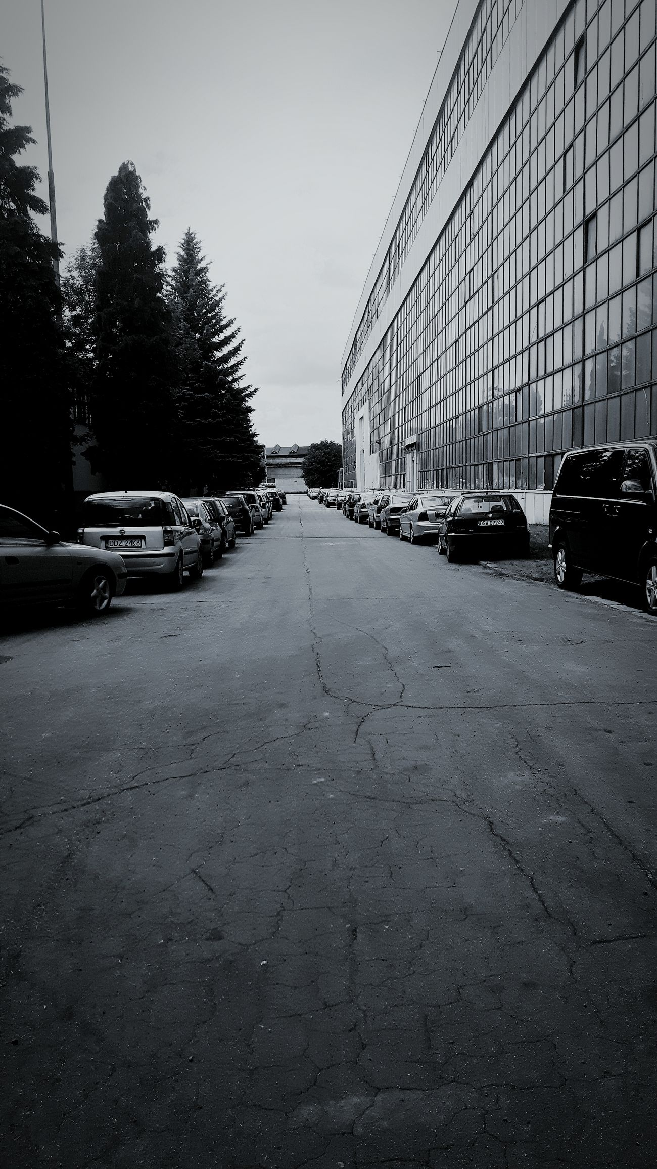 Alone Longway Trees Cars Road Greylife Cracks In The Road Poland Memories Mycity Sad Lonely Gloomy Factory Building Sky Photooftheday Photo Black White 2016 Noon Bestoftheday Need For Speed