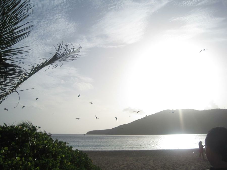 Water Sea Bird Nature Flying Animal Themes Beauty In Nature Animals In The Wild Scenics Sky Large Group Of Animals Flock Of Birds Day Tranquility Outdoors Culebra Puerto Rico Beach Horizon Over Water Mountain No People