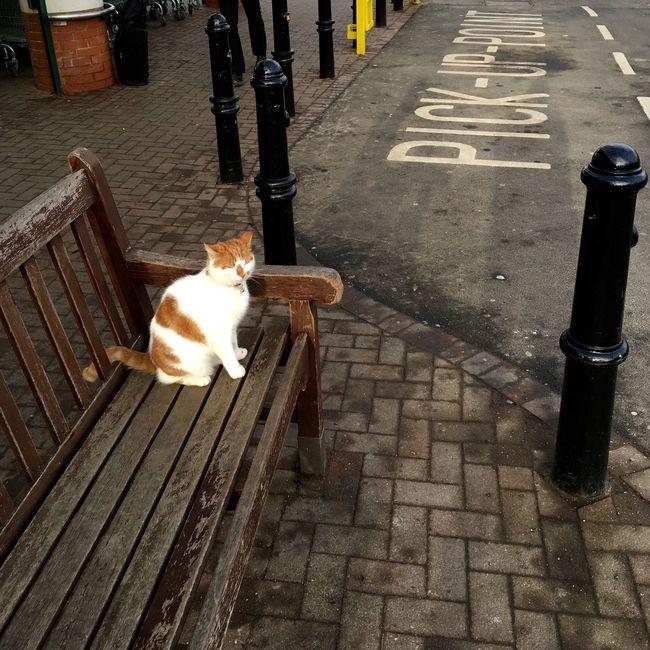 Cat Bus Stop Buddy Happy Funny Lolcat
