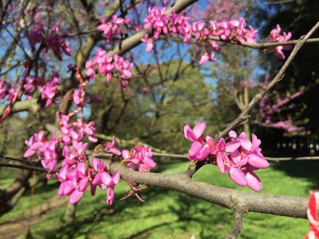 Sunny Day Pincio PhonePhotography Scatti_italiani Moments Taking Photos Iphonephoto Iphonephotography Hi! Fotografia Foto Walking Around Nofilter Photography Fiori Colorati.. Primavera Flowers