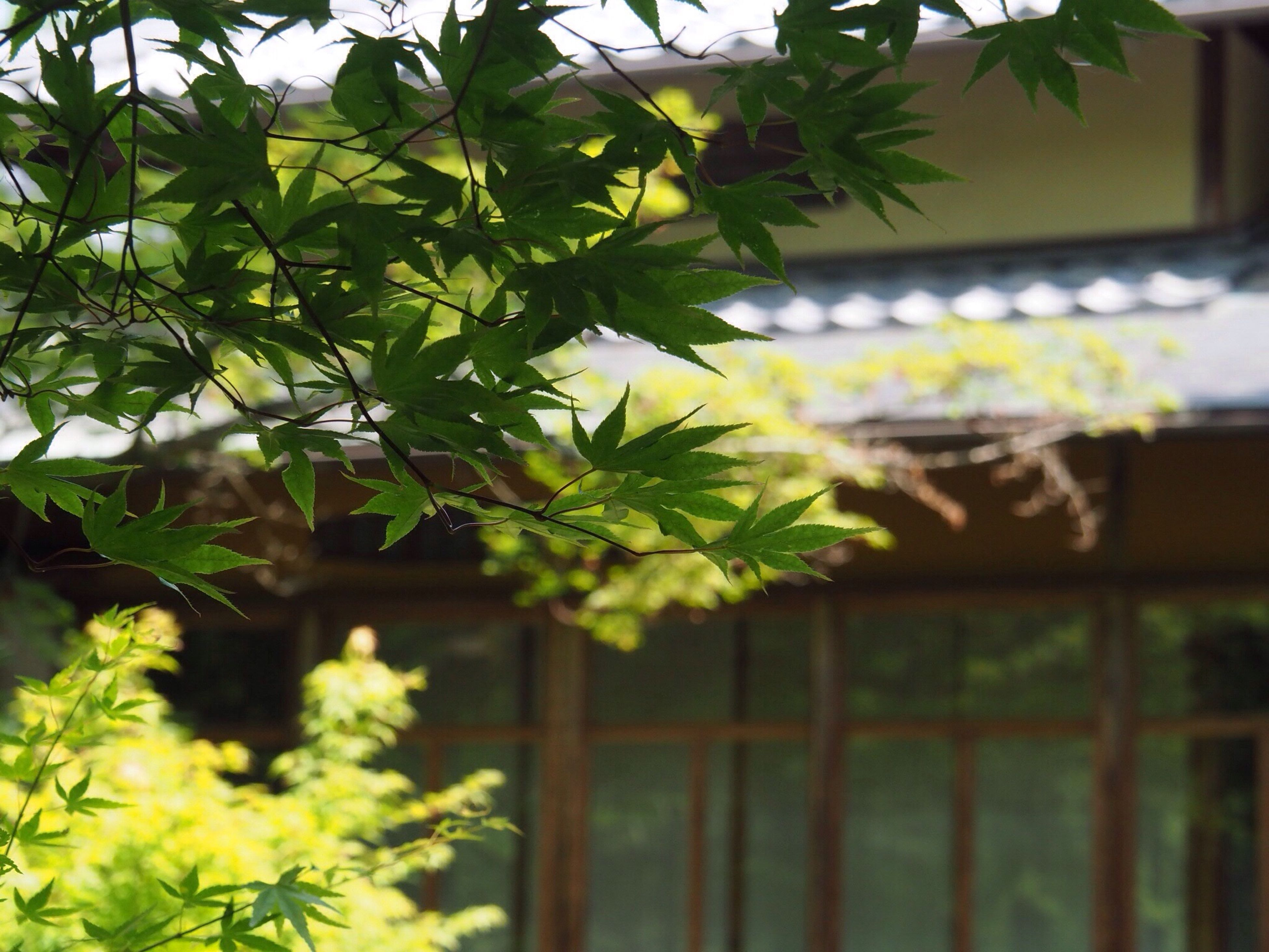 Kyoto Japan Arashiyama Hogonin Temple Garden Green Architecture Day No People Outdoors Leaf Nature Beauty In Nature Healing Silence Summer Olympus PEN-F 京都 日本 嵐山 宝厳院 獅子吼の庭 借景回遊式庭園