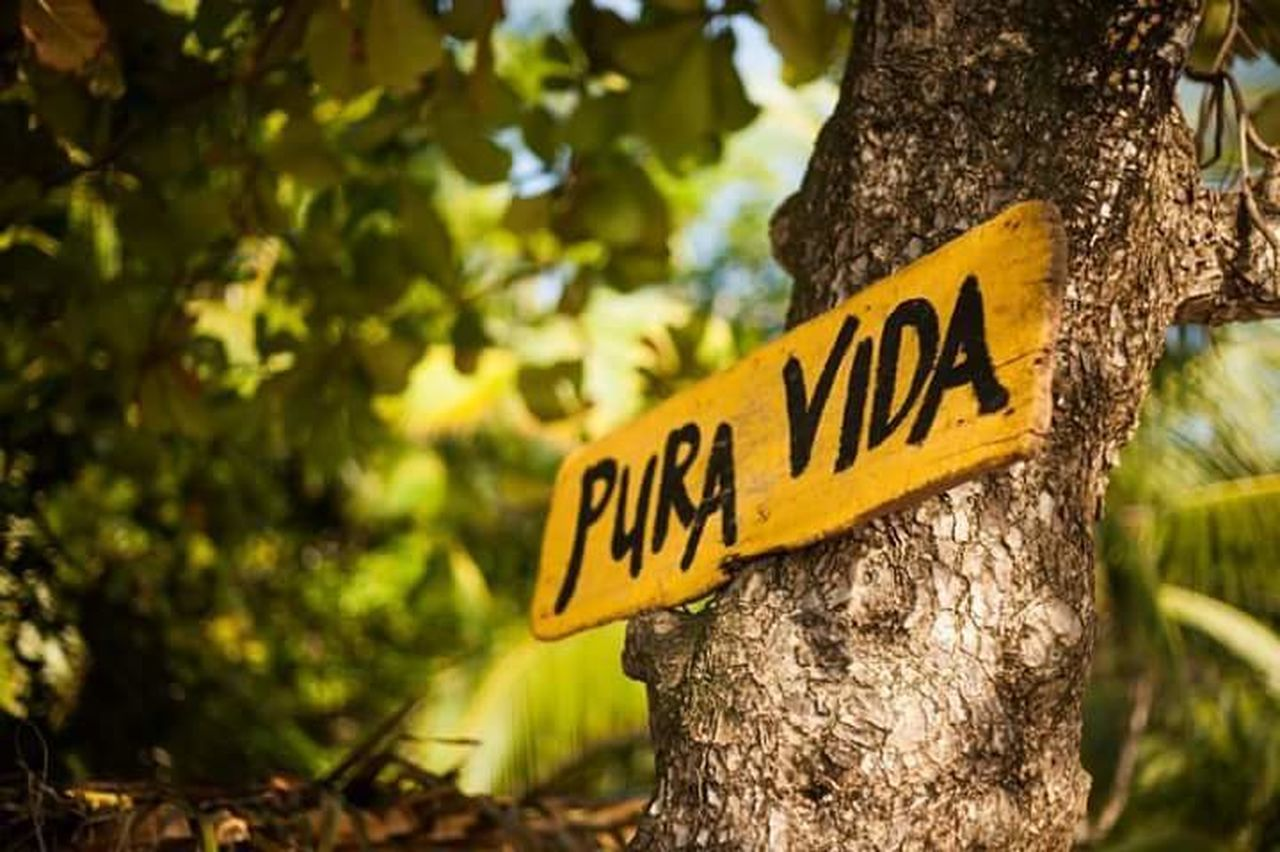 Pura Vida ✌ Text Communication Focus On Foreground Tree Trunk Tree Day No People Close-up Nature Outdoors