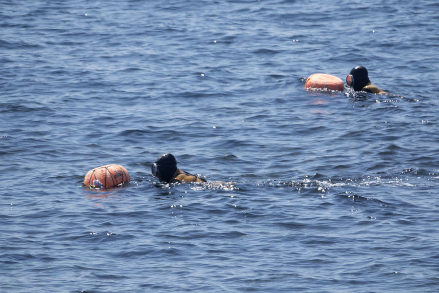 Haenyeos who are female divers picking up sea food in sea. Diving JEJU ISLAND  Animal Themes Animal Wildlife Animals In The Wild Beauty In Nature Bird Day Female Diver Haenyeo Lake Nature No People One Animal Outdoors Sea Swimming Water Waterfront
