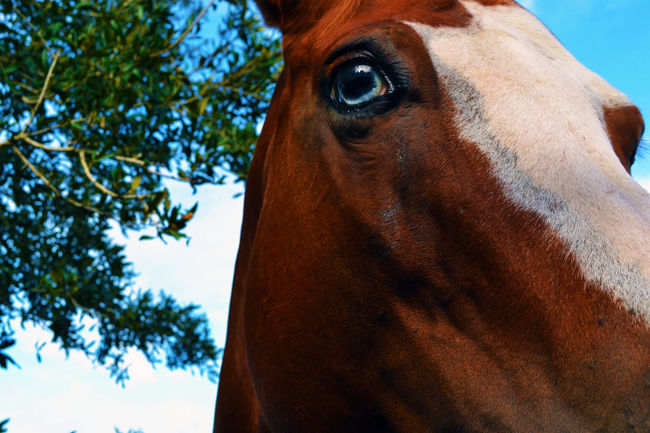 Blue Eyed Horse Equestrian Photography Equine Equinephotography Horse Horse Eye Horses