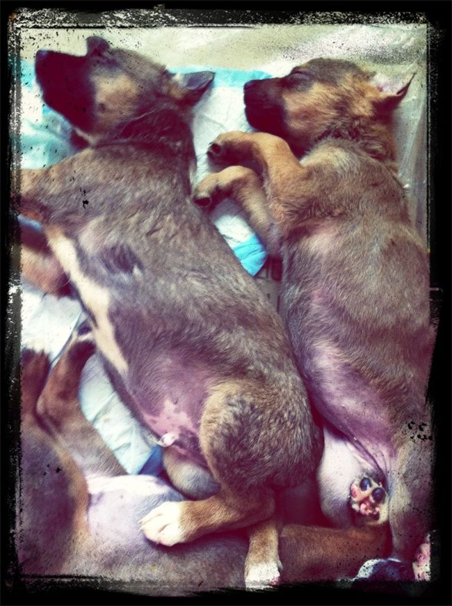 Brother & sister @ nap time ! U really have to admit that they r too cute !! Come on local people !! Anyone interested in adoptiing 1 of these sweet little babies ?? They r SWEET !!!