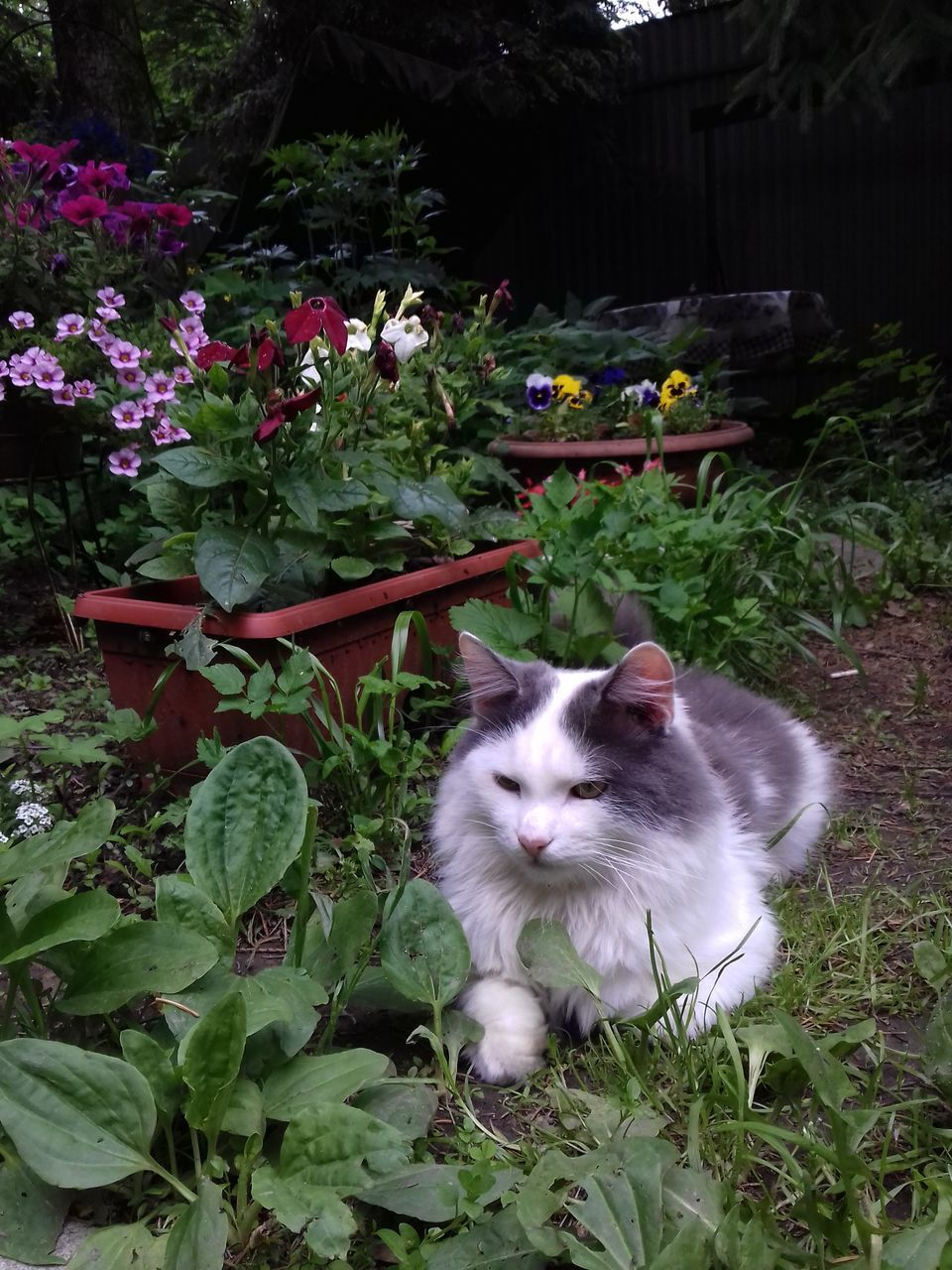 domestic cat, plant, animal themes, feline, pets, cat, domestic animals, mammal, one animal, flower, nature, growth, no people, grass, outdoors, leaf, day, portrait, sitting