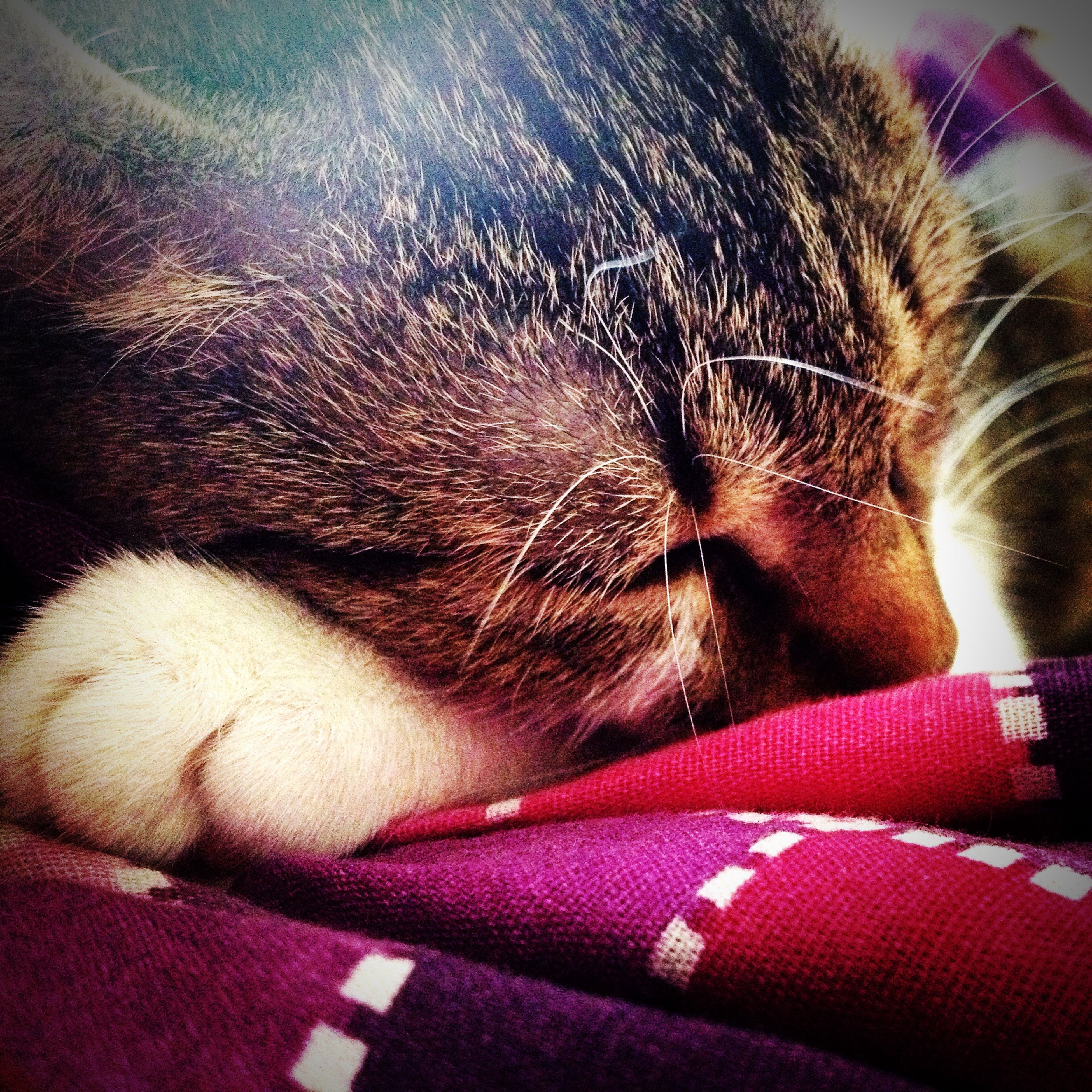 pets, domestic animals, indoors, one animal, mammal, animal themes, domestic cat, close-up, cat, feline, relaxation, whisker, animal body part, bed, sleeping, part of, animal head, home interior, lying down, resting