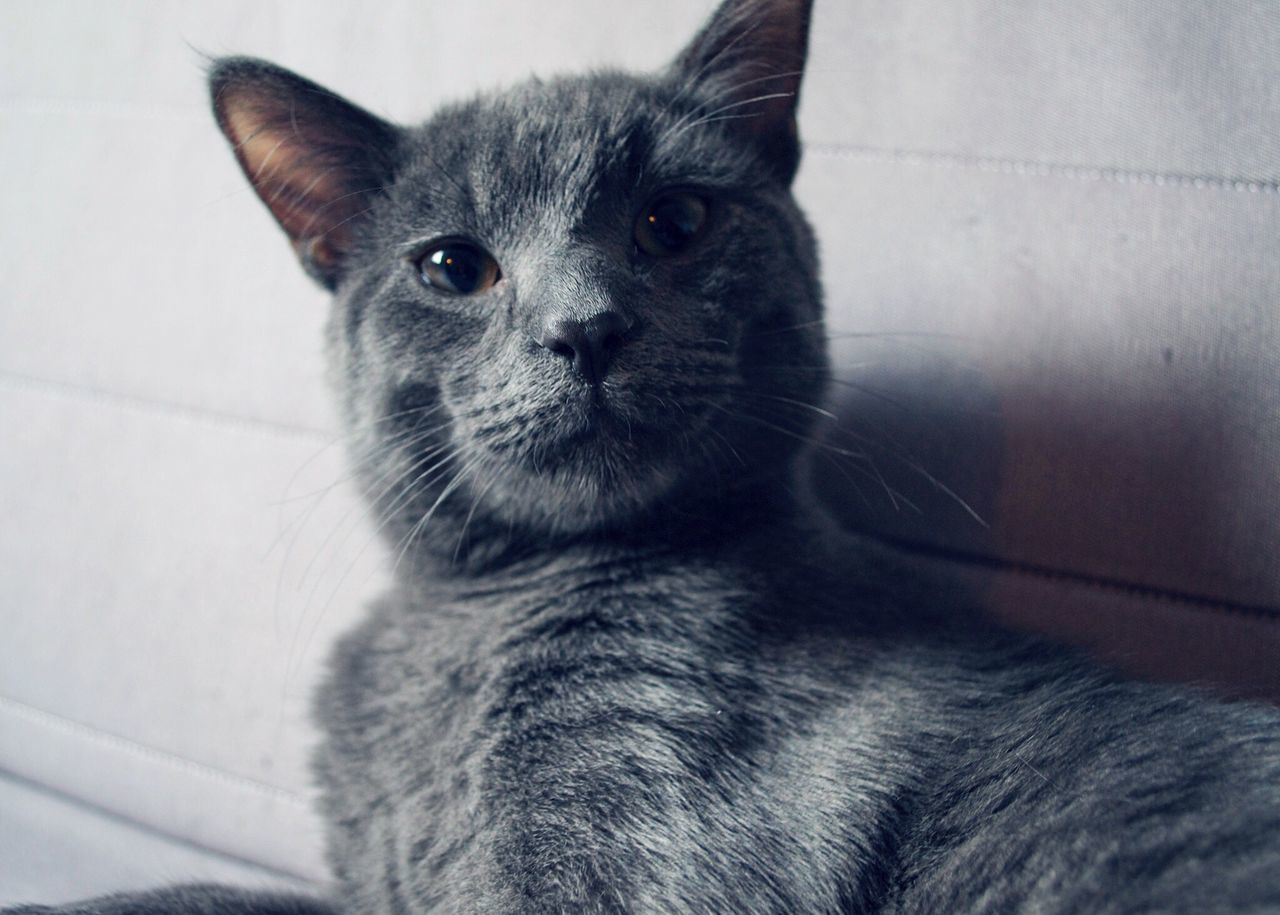 This guy's face! 😍 Kitten Adorable Cats That Have Human Faces Grey Cat Looking At Camera Looking Expressive Expressive Eyes Domestic Pets EyeEm Animal Lover Color Palette