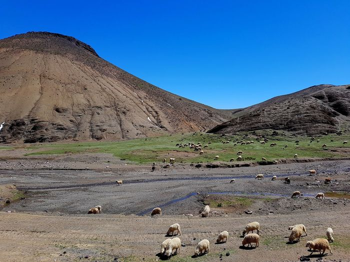 Blue Desert Landscape Sand Sand Dune Nature No People Outdoors Mountain Beauty In Nature Sky Day Sheep African Tranquility Morocco Mountains Nature Tranquil Scene Clear Sky