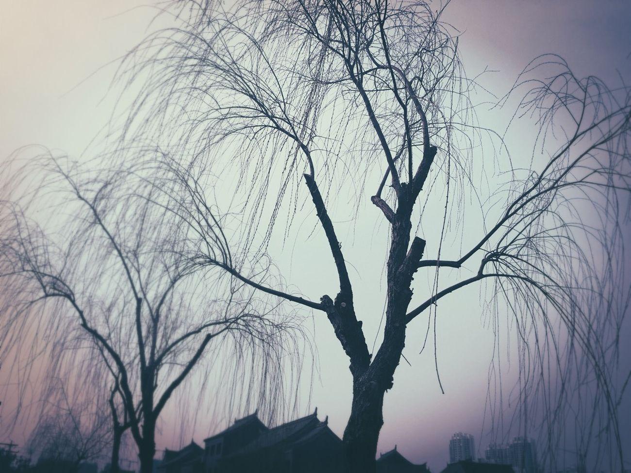 枯树的垂泣