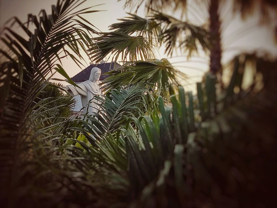 Lafavela Backtonature Nature Photography Oppof1s Indonesian Canggu Seminyak SeminyakBali Bali Baliisland Architecture Travel Destinations First Eyeem Photo Beauty In Nature
