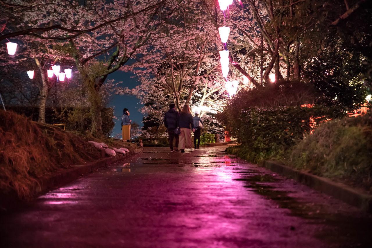 城山公園 桜 夜桜 夜桜ライトアップ Sakura Sakura Blossom Night Photography Nightshot Lightup