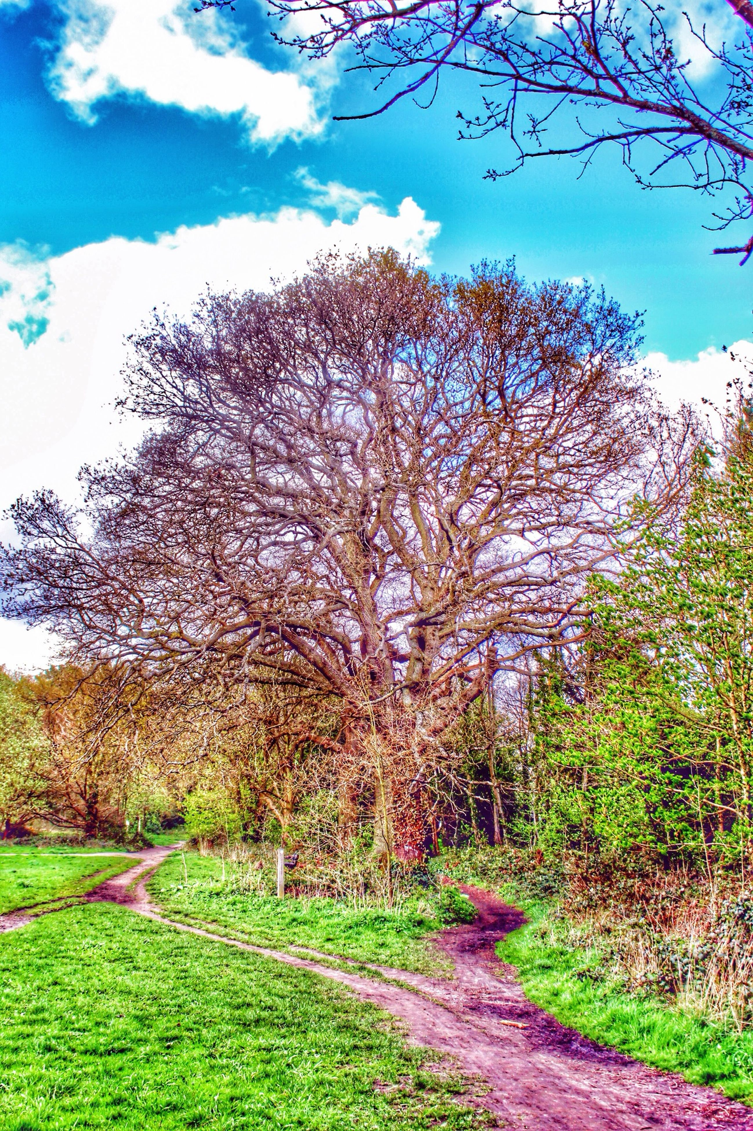 tree, tranquility, sky, the way forward, tranquil scene, landscape, field, bare tree, grass, nature, beauty in nature, scenics, growth, road, rural scene, branch, blue, diminishing perspective, transportation, day